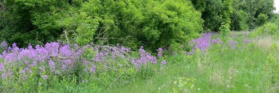 Mary Jo Wegner Arboretum & East Sioux Falls Historic Site